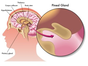 Pineal Gland, Mind's Eye & Third-Eye Chakra